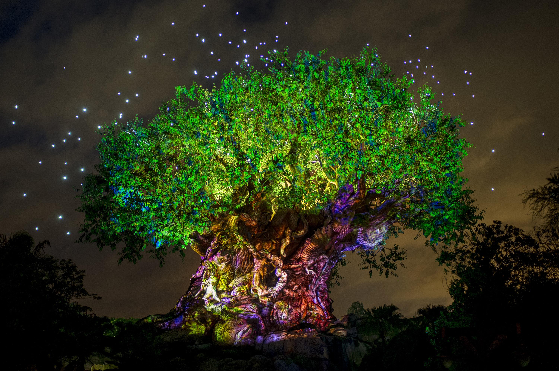 сказочные деревья фото любят